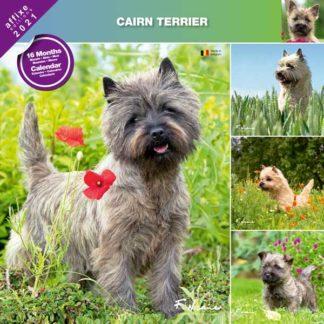 Calendrier Cairn Terrier 2021
