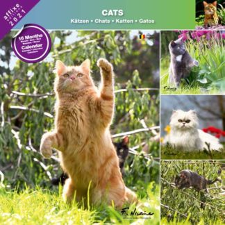 Calendrier Cats 2021