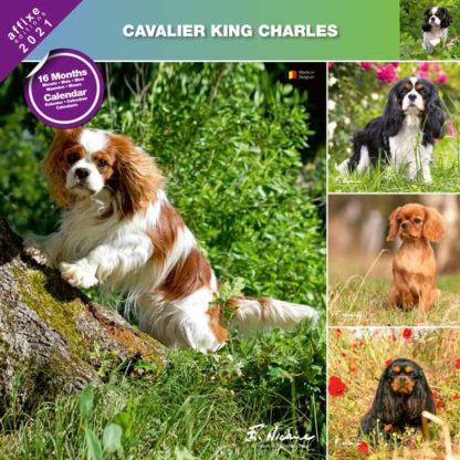 Calendrier Cavalier King Charles 2021