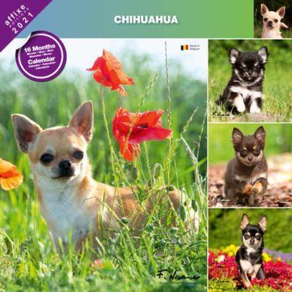Calendrier Chihuahua 2021