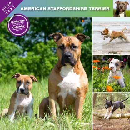 Calendrier American Staffordshire Terrier 2021