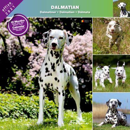 Calendrier Dalmatian 2021