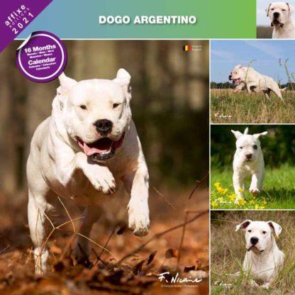 Calendrier Dogo Argentino 2021