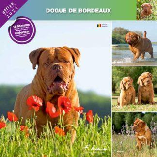 Calendrier Dogue de Bordeaux 2021