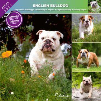 Calendrier English Bulldog 2021