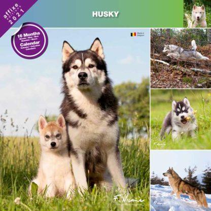 Calendrier Husky 2021