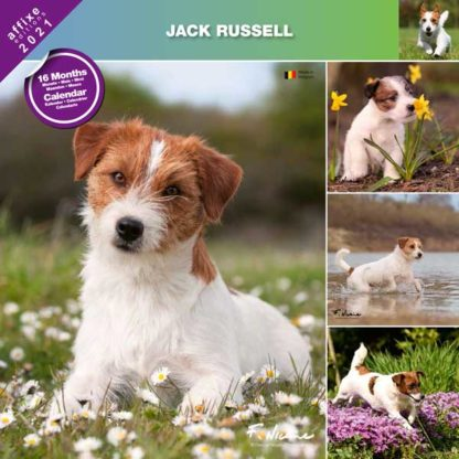 Calendrier Jack Russel 2021