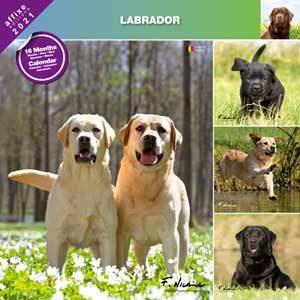 Calendrier Labrador 2021