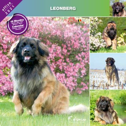 Calendrier Leonberg 2021
