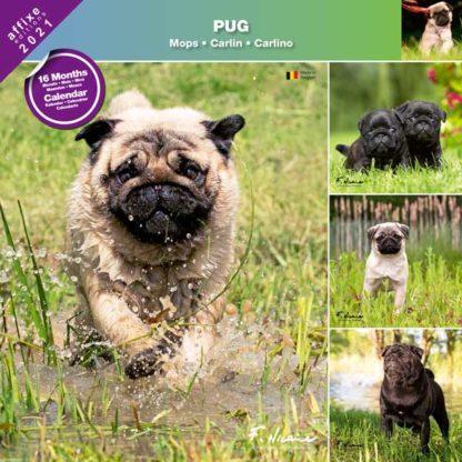 Calendrier Pug 2021