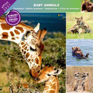 Calendrier Baby Animals 2021