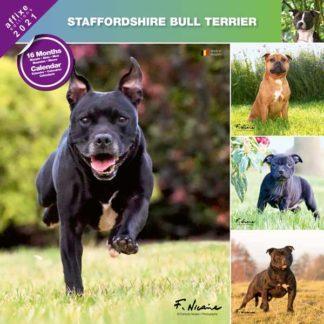 Calendrier Staffordshire Bull Terrier 2021