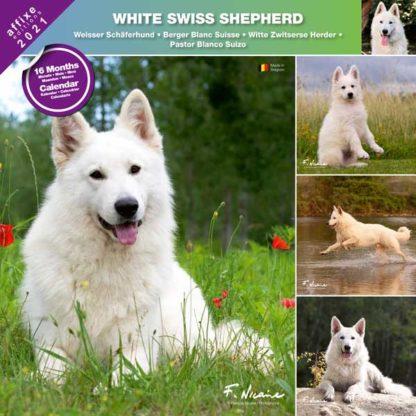 Calendrier White Swiss Shepherd 2021