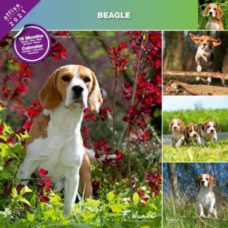 Calendrier Beagle 2021