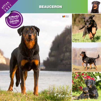 Calendrier Beauceron 2021