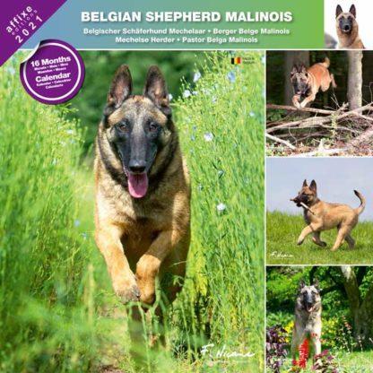 Calendrier Belgian Shepherd Malinois 2021
