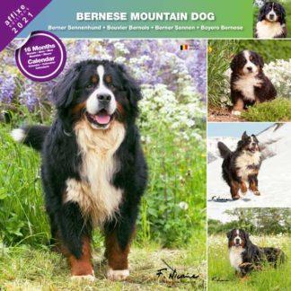 Calendrier Bernese Mountain Dog 2021