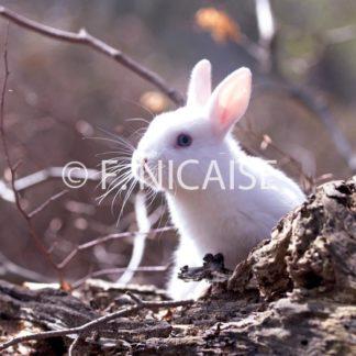 Rabbits 2019
